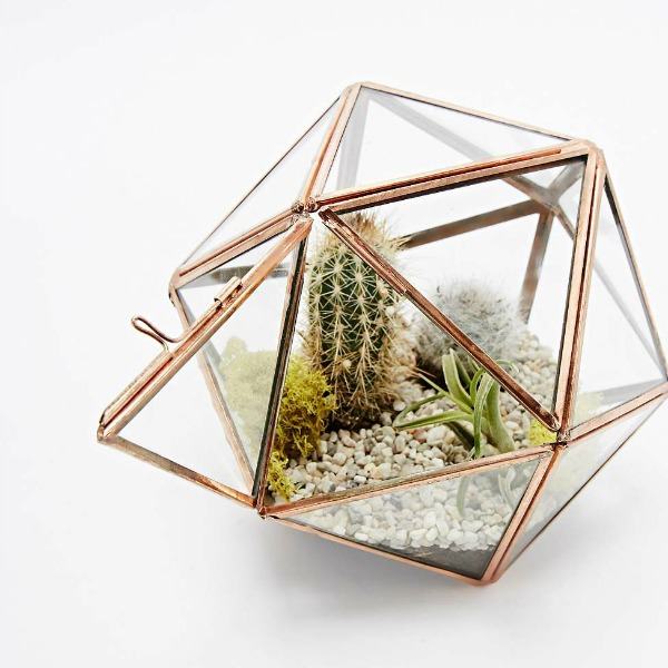 Terrarium vintage tendance jungle
